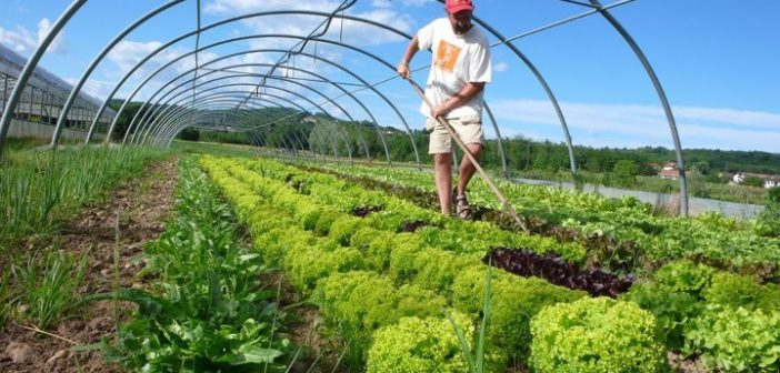A trip to the grocery store might convince you that US farmers are rapidly converting land to organic production. You'd be wrong.