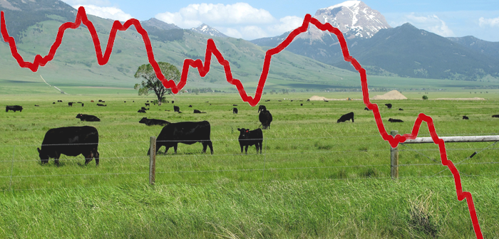 Cattle overlaid with downward trending price curve