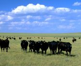 Global Beef Competition is Getting Fierce.  How is the US Fairing?