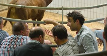 Cattle auction buyers