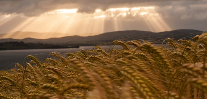 Crop Insurance Selections in Montana