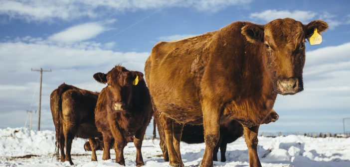 New Tool:  Cow-Calf Pasture Lease Calculator
