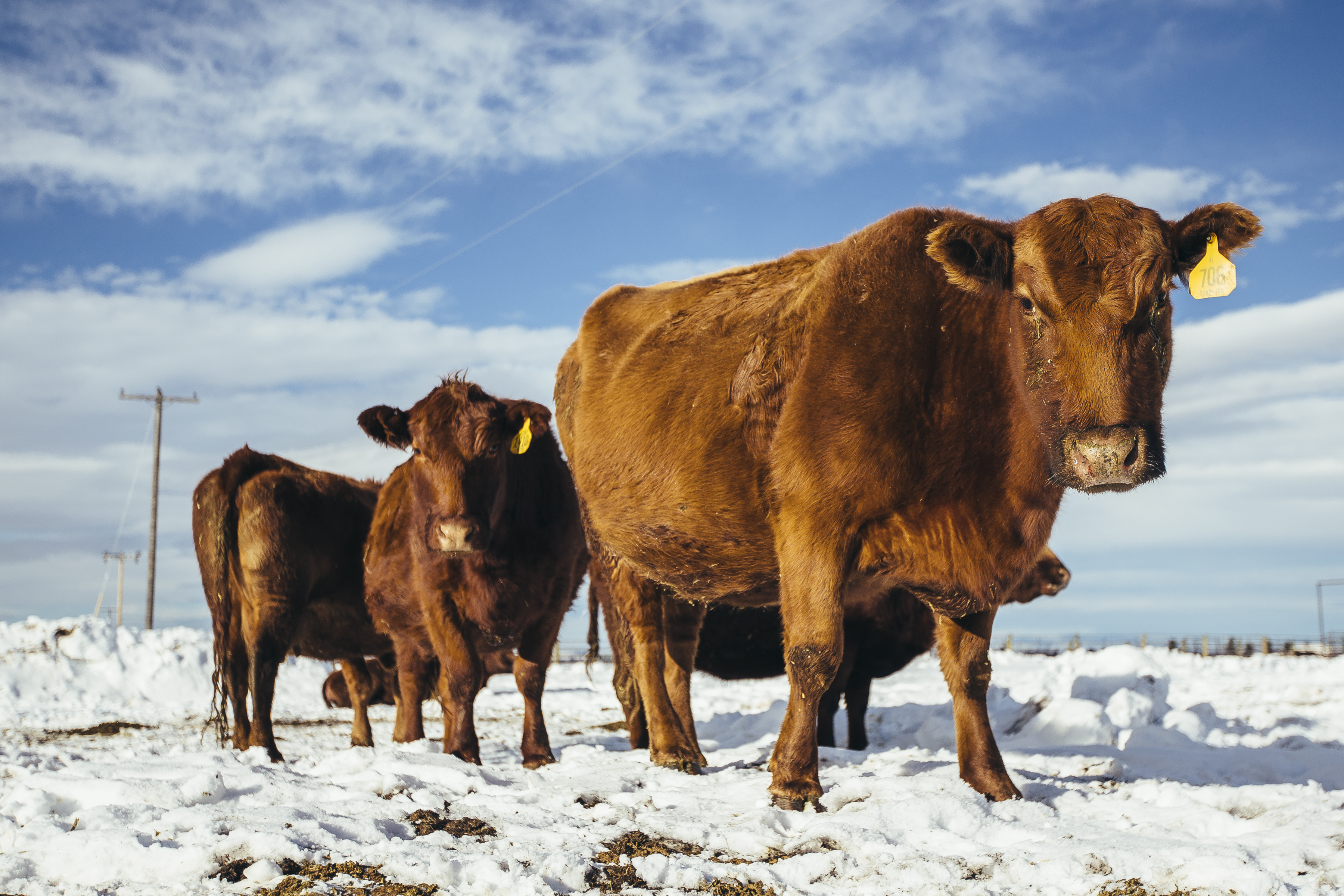 5 trending headlines: new cattle calculator app available; plus.