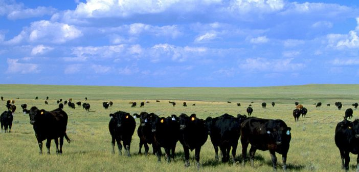 What does JD.com and China mean for the future of Montana beef?