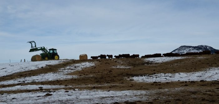 Finding the Role for Smaller Family Farms in an Era of Rapid Consolidation