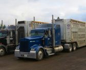 How Hours of Service and ELD Provisions Could Skew the Livestock Marketing Playing Field
