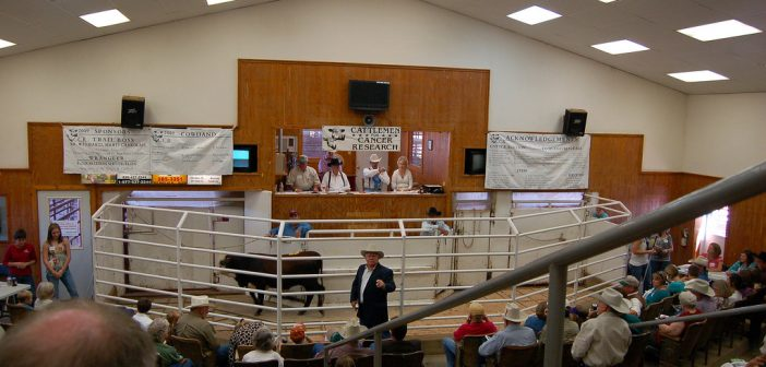 How Much Could HOS and ELD Regulations Skew the Livestock Market?