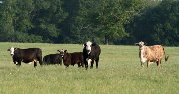 U.S. Beef Exports to the EU Could More Than Double