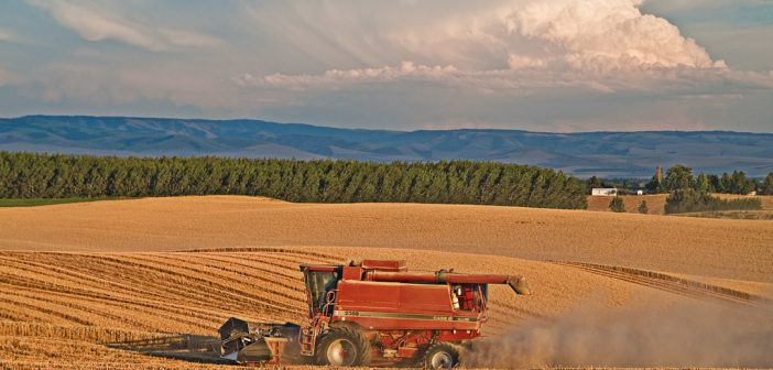 USMCA to Increase Exports of Capital-Intensive Agricultural Products
