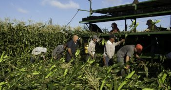 Retaining Farm Workers: Are Non-Wage Benefits a Determining Factor?