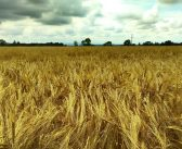 How prevalent are absentee landlords in the U.S. agricultural sector?