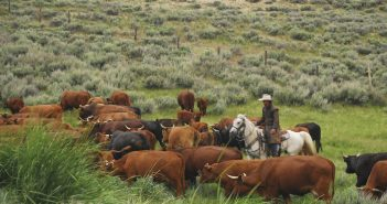 Pasture, Rangeland, and Forage Insurance Program 101