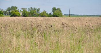 The fate of land in expiring CRP contracts: A Montana perspective
