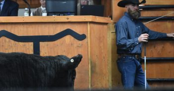Cattle market expectations for fall under COVID-19.