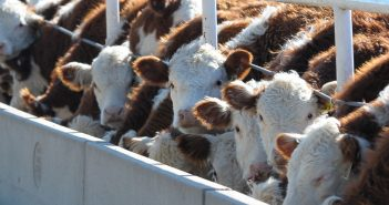 COVID-19: Government Response, Global Trade, and Livestock Markets