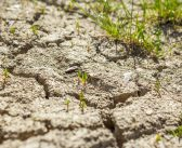The mystery of the missing drought impacts