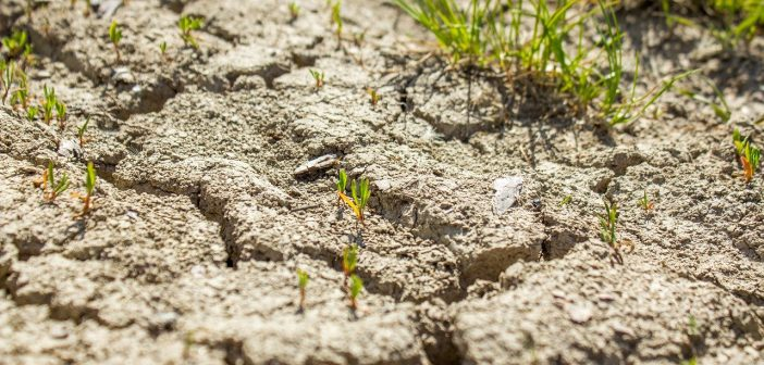 Drought Dry Cracks Ground  - frolicsomepl / Pixabay